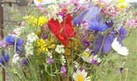 CONSEIL : La cueillette de fleurs en forêt